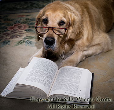 dog reads