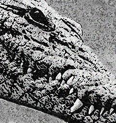 Crocodile by Sally Wiener Grotta