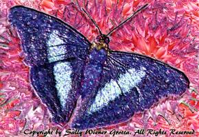 Butterfly by Sally Wiener Grotta