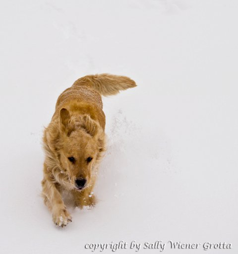 Watson in Snow by Sally Wiener Grotta