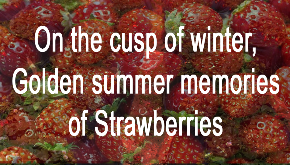 Winter Memories of Strawberries by Sally Wiener Grotta