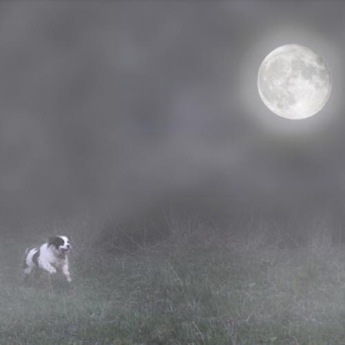 Moondoggie